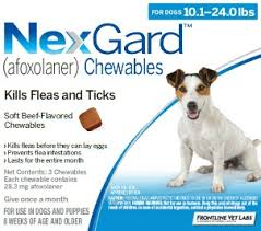 Nexgard | Maryland Ave Pet Hospital | St. Paul, MN 55117 | Veterinarian
